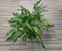 Helios2 Plant thumbnail